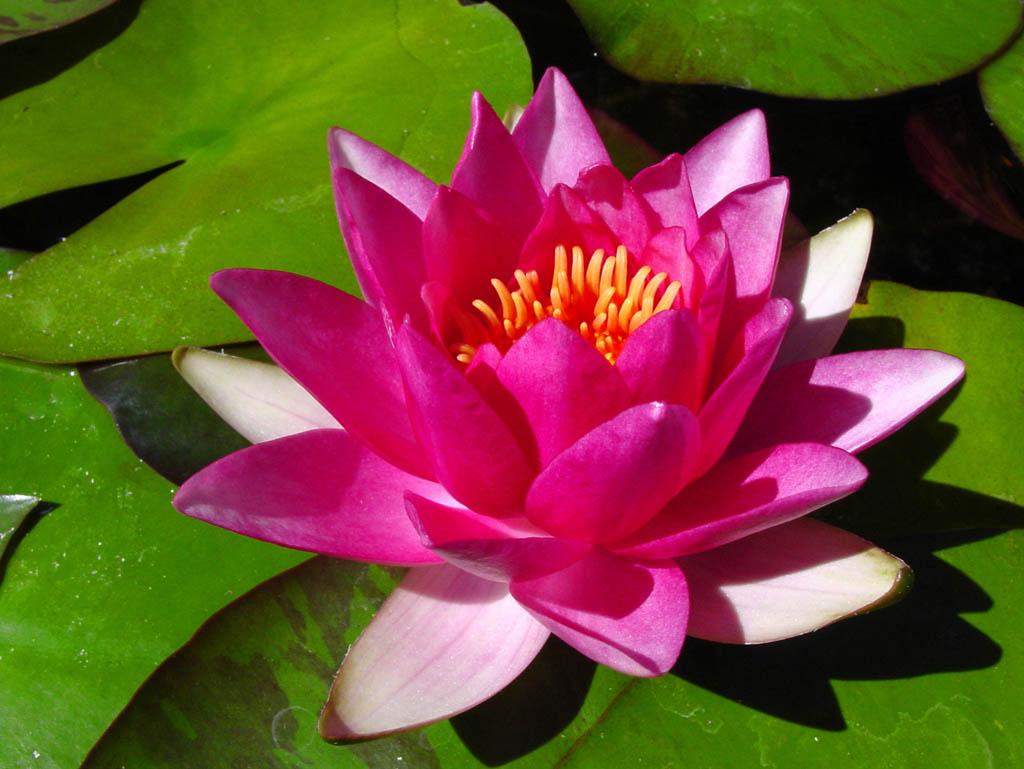 Flower index m z fantastical wedding stylings water lily izmirmasajfo