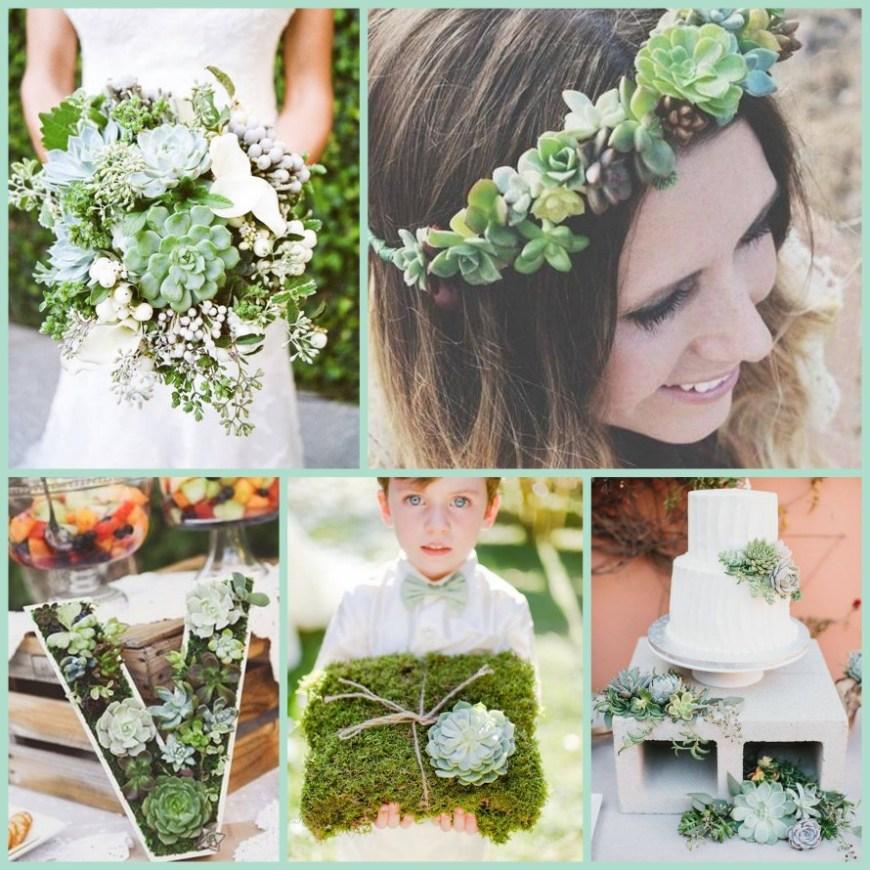 SucculentSucculents Collage